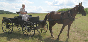 AmishQuilter Amish Girl with Buggy